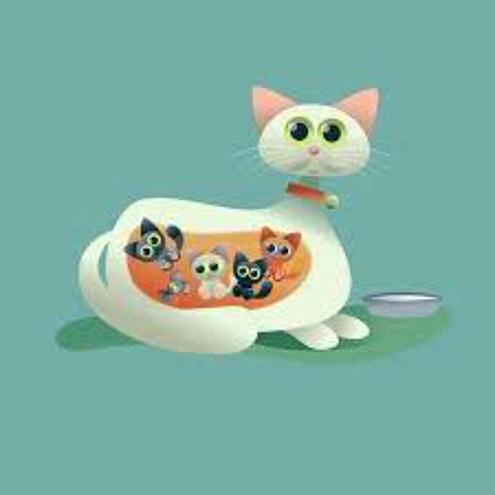 Физиология беременности у кошек