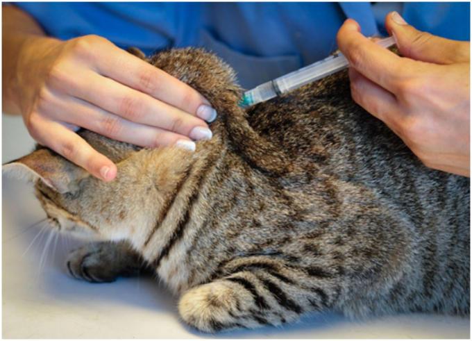 Ветеринарные специалисты рекомендуют выполнять борьбу с блохами и другими эктопаразитами регулярно