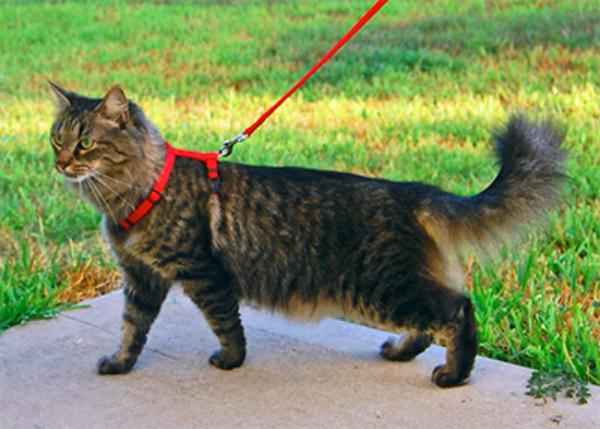 Профилактика пироплазмоза у кошек