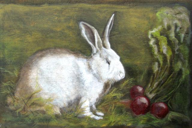 Правила кормления кроликов свеклой