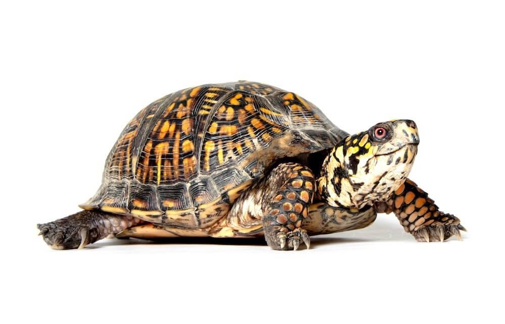 постоянно пополняется картинка черепахи для фона это только архитектурный